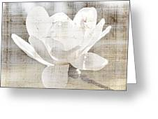 Magnolia Flower Greeting Card by Elena Elisseeva