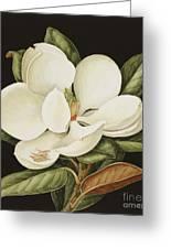 Magnolia Grandiflora Greeting Card by Jenny Barron