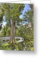 Magnolia Plantation Cypress Tree Greeting Card by Dustin K Ryan