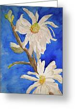 Magnolia Stellata Blue Skies Greeting Card by Beverley Harper Tinsley