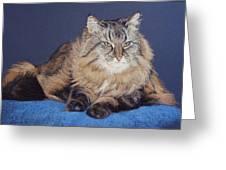 Maine Coon Kitty Greeting Card by Kay Ridge