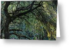Majestic Weeping Willow Greeting Card by Marion McCristall