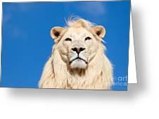 Majestic White Lion Greeting Card by Sarah Cheriton-Jones