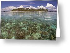 Malaysia, Mabul Island Greeting Card by Dave Fleetham - Printscapes