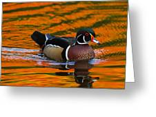 Male Wood Duck, Aix Sponsa, Swimming Greeting Card by Darlyne A. Murawski