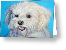 Maltese in Sunlight Greeting Card by Dottie Dracos