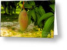 Mango Work Number One Greeting Card by David Lee Thompson
