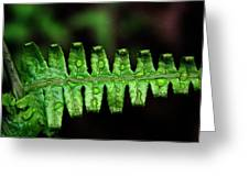 Manoa Fern Greeting Card by Jennifer  Bright