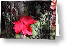 Maple Leaf Still Life Greeting Card by Charles Warren