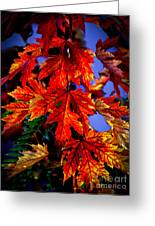 Maple Leaves Greeting Card by Robert Bales