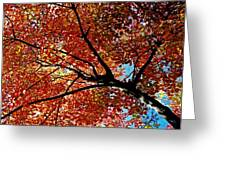 Maple Tree In Autumn Glow Greeting Card by Juergen Roth
