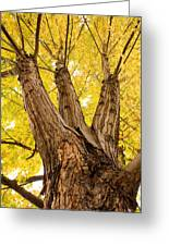 Maple Tree Portrait Greeting Card by James BO  Insogna