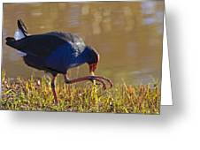 March Of The Swamphen Greeting Card by Mike  Dawson