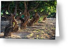 Mastic Tree   Greeting Card by Emmanuel Panagiotakis