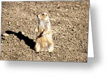 Mean Old Prairie Dog Greeting Card by Christopher Wood