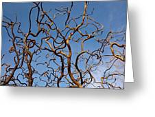 Medusa Limbs Reaching For The Sky Greeting Card by Douglas Barnett