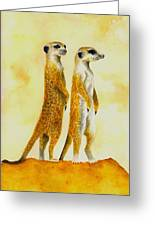 Meerkats Greeting Card by Michael Vigliotti