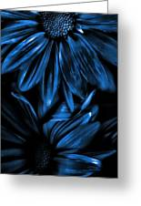 Midnight Blue Gerberas Greeting Card by Bonnie Bruno