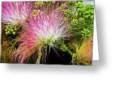 Mimosa Delight Greeting Card by Matthew Moore Jr