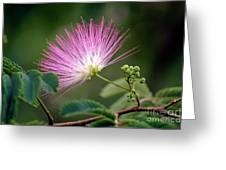Mimosa1 Greeting Card by Steven Foster