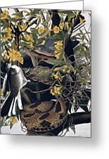 Mocking Birds And Rattlesnake Greeting Card by John James Audubon