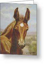 Molly Mule Foal Greeting Card by Dorothy Coatsworth
