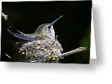Mom Greeting Card by Mike Herdering