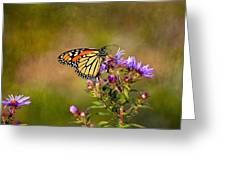 Monarch Butterfly In The Afternoon Sun Greeting Card by James Steele