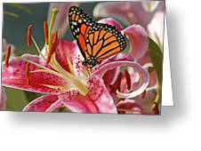 Monarch On A Stargazer Lily Greeting Card by Cindi Ressler