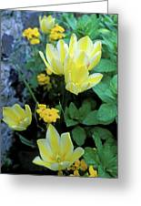 Monet's Fancy Tulips Greeting Card by Kathy Yates