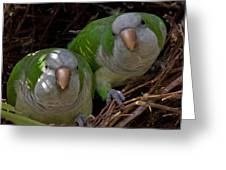 Monk Parakeet Pair Greeting Card by Larry Linton