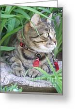 Monty In The Garden Greeting Card by Jolanta Anna Karolska