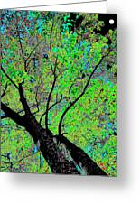 Moon Over The Maples Greeting Card by Will Borden