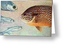 Mooneyes, Sunfish Greeting Card by James W Johnson