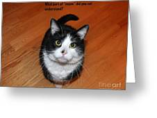 More Words From  Teddy The Ninja Cat Greeting Card by Reb Frost
