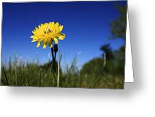Morning Flower Greeting Card by Gulf Island Photography and Images