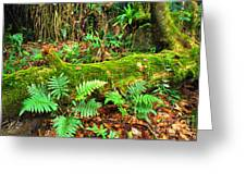 Moss On Fallen Tree And Ferns Greeting Card by Thomas R Fletcher