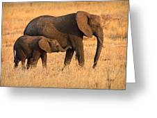 Mother And Baby Elephants Greeting Card by Adam Romanowicz