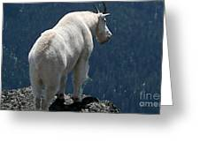 Mountain Goat 2 Greeting Card by Sean Griffin