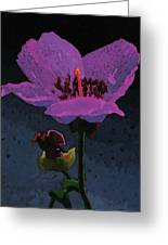Mountain Wildflower Greeting Card by Bob Coonts
