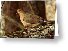 Mourning Dove At Dusk Greeting Card by Amy Tyler