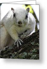 Mr. Inquisitive I  Greeting Card by Betsy Knapp