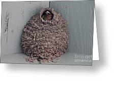 Mud Nest  Greeting Card by Pamela Walrath
