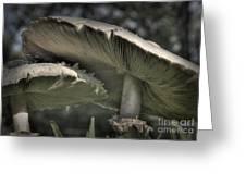 Mushrooms Greeting Card by Fred Lassmann