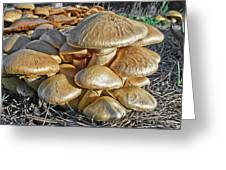 Mushrooms Greeting Card by Lynn Andrews