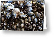 Mussels Greeting Card by Justin Albrecht