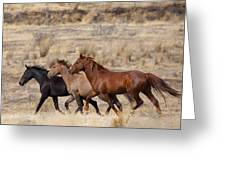 Mustang Trio Greeting Card by Mike  Dawson