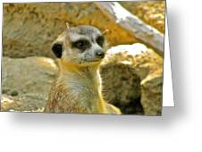 My Favorite Meerkat Greeting Card by Debra     Vatalaro