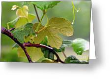 My Grapvine Greeting Card by Robert Meanor