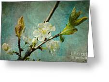 My Springtime Greeting Card by Angela Doelling AD DESIGN Photo and PhotoArt